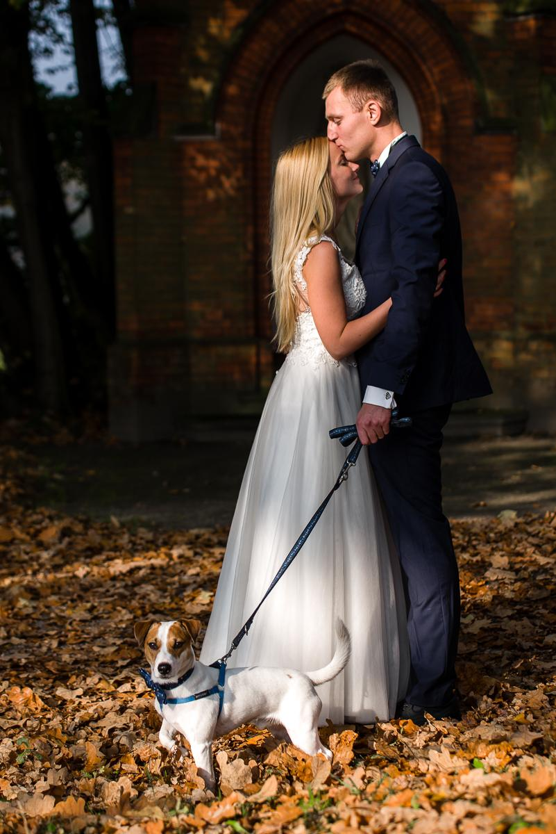 plener ślubny z psem