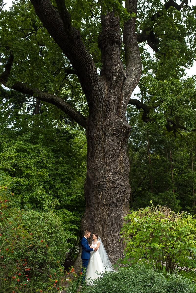 sesja ślubna w ogrodzie botanicznym w Krakowie